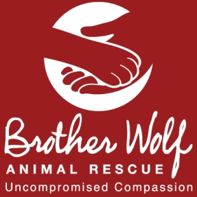 Brother-Wolf-Animal-Rescue-No-Kill-Asheville.jpg