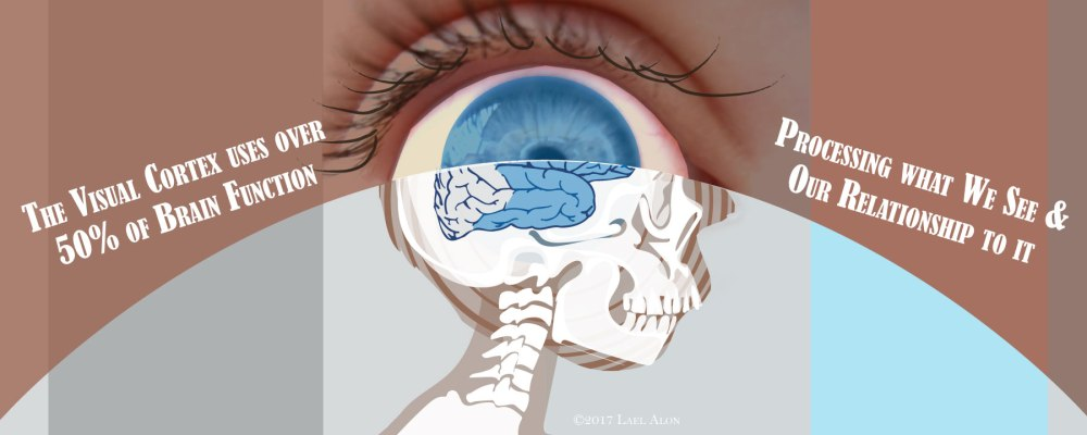 Visual-Brain-Function-Slide-2